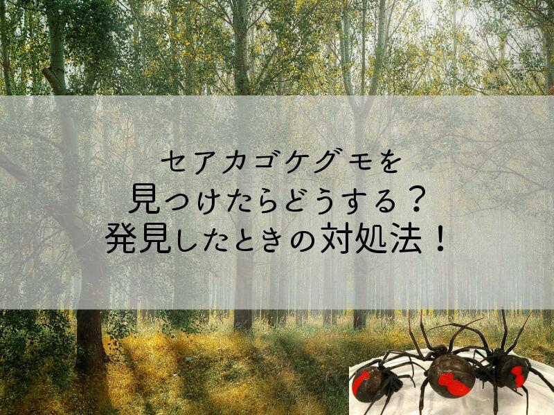 セアカゴケグモを見つけたらどうする?千葉県で発見したときの対処法!